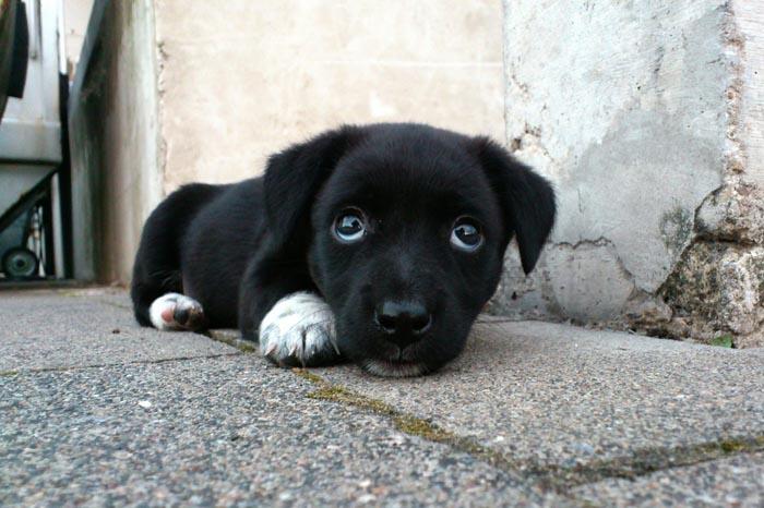 Puppy Obedient Training