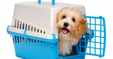 How to Crate Train a Puppy?