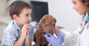 Puppy Vaccination Schedule