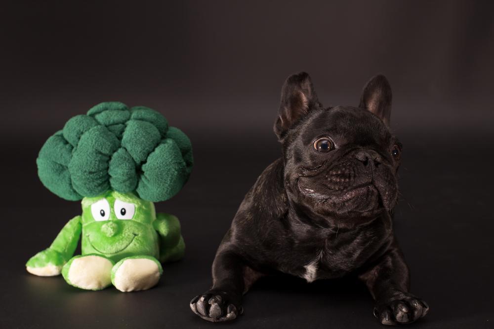 can a dog eat broccoli